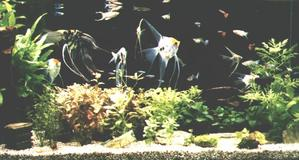 Fishp01s_2